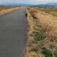 京都散歩と山梨散歩