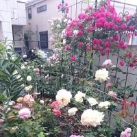 LA VIE EN ROSE の庭