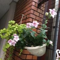 6月のお花とグルメと思い出少し