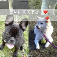 26日(金)京都パーカーハウスロール27日(土)神戸クレオール行きます!