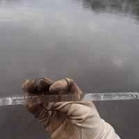 2017年1月18日 (水)