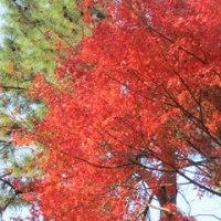 小倉城の紅葉