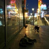 夜の街は猫のもの