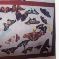 雲南省の胡蝶泉伝説について14