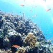 暑いあつ~い夏の海でのダイビング(●^o^●)