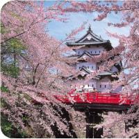 ◯【観桜北国予算日本一】・・・・・待ち望む北国青森の桜を望む心意気!