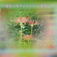 『 追憶は失せることなし彼岸花 』TAO575交心rq2204