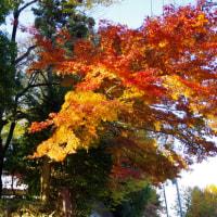 氷川神社の紅葉