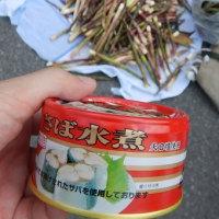 ということで,この週末は志賀高原へタケノコ狩りに行ってみた