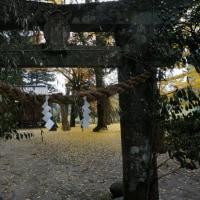 三瀬曲渕の紅葉5(ヨシ)