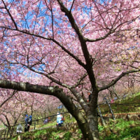 2017 R隊写真部の撮影会で、まつだ桜まつりへ