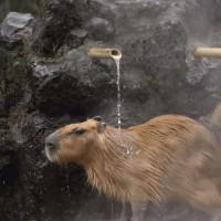 ✳︎コマリ女子組のお風呂シーン2〜埼玉県こども動物自然公園〜