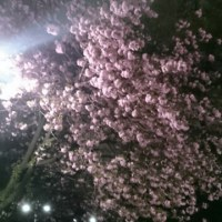 夜桜が素敵だぁ~