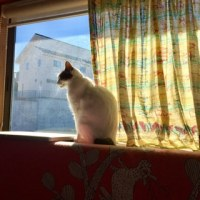 猫日 2日目
