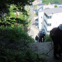12 牛田山(261m:東区)~二葉山縦走登山  「二葉山」に到着