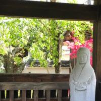 牡丹がきれいな石光寺、當麻寺へ