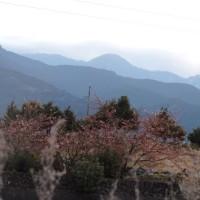 春めいた里山の朝
