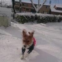 雪遊びだ~い好きなモジャ♪