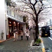 広  尾  散  策    桜 の 頃   ( 2 0 1 7   春)