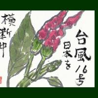 唐辛子(絵手紙)