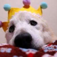 愛犬まる21才!