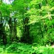 天生湿原と籾糠山
