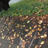 五条川の秋