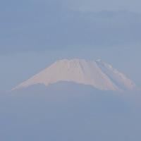 旬のゴボウを玉子でとじて泥鰌抜き柳川蕎麦の朝・雲間から富士