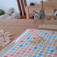 猫とスクラブル