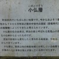 大地沢青少年センタのジャケツイバラが満開 2017.5.20