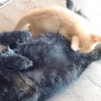 一子💕💕😌💕💕子猫の金庫ちゃん