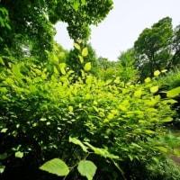 超広角レンズで撮った梅雨の赤塚植物園(10ミリレンズの世界)
