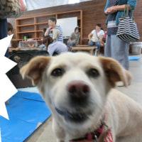 ユキちゃんの日記 【9月6日】