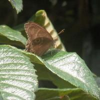 山盛りのポップコーン、落書き、清楚な蝶