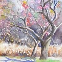 梅が咲きました。 (小石川植物園にて)