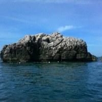 パンガン島でジンベイザメ!