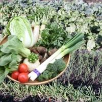旬の野菜セット販売開始致しました。