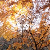 紅葉 泉自然公園(2016/12/4)
