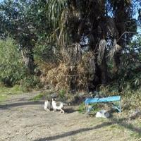 日溜まりの猫たち