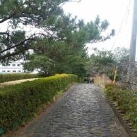 三島夢街道と三嶋大社で初詣、 更に楽寿園、富士山湧水の柿田川へ