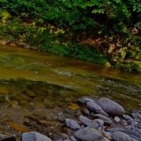 ニコンと山の渓流