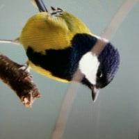 台湾野鳥撮影旅の8日目