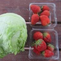 収穫 イチゴ・玉レタス・ニンニク
