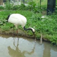 旭山動物園~行くなら今、空いています
