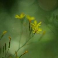 お花の宝庫
