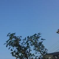 仙台の空6月20日、火曜日