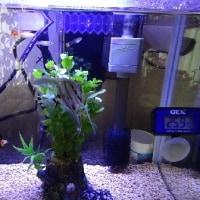 熱帯魚の飼育