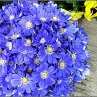 我が家の花たち