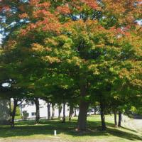 16-10-16 里の秋