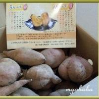 ☆ …安納芋に満たされて(*´σー`)エヘヘ…